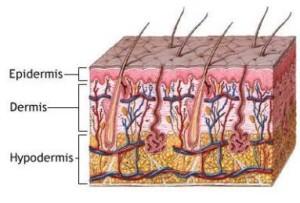 capas de piel en la radiofrecuencia